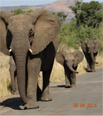 Durban-Big-5-Day-Safari-Tours