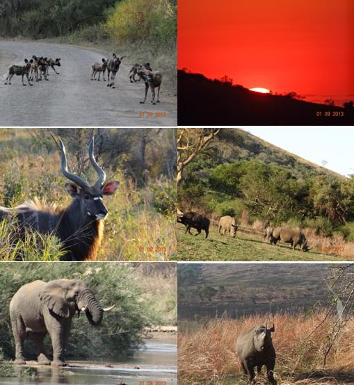 Hluhluwe Umfolozi 2 day Safari Tour 31 to 1 September 2013
