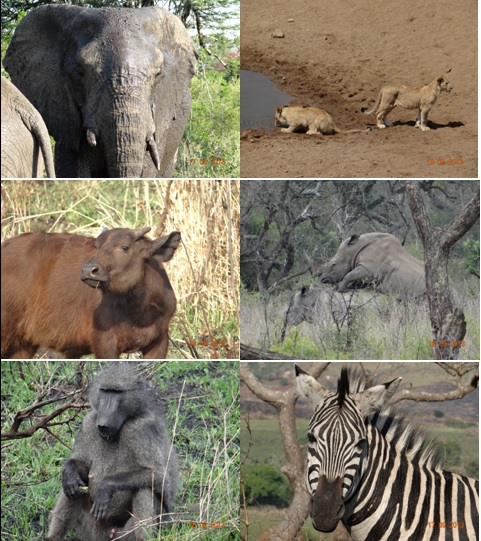 Hluhluwe Umfolozi 4 Day Safari Tour 16 to 19 September 2013