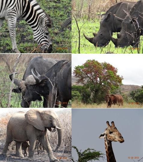 Hluhluwe Umfolozi Day Safari Tour 10 September 2013