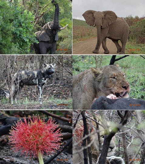 Hluhluwe 3 day safari tour 27 to 29 September 2013