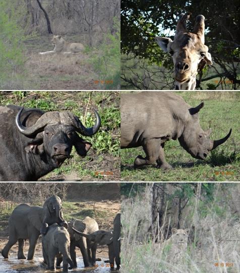 Hluhluwe Umfolozi 3 day safari Tour 4 to 6 October 2013