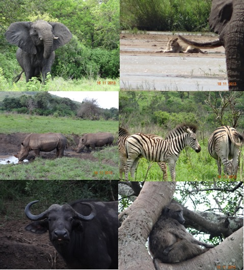Hluhluwe Umfolozi 3 Day Safari Tour 16 to 18 Novemeber 2013