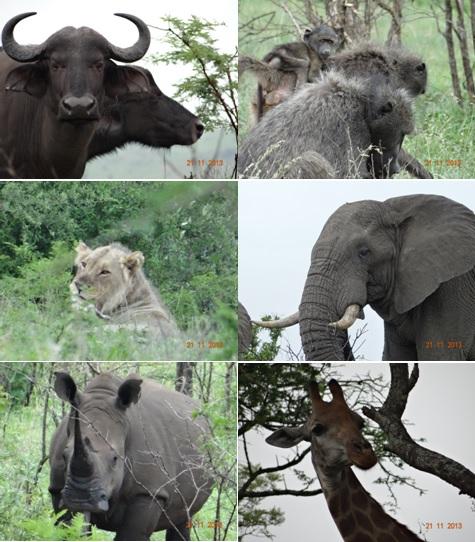 Hluhluwe Umfolozi Day Safari Tour 21 November 2013