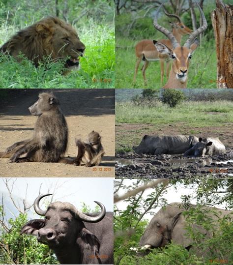 Hluhluwe Umfolozi 3 Day Safari Tour 19 to 21 December 2013