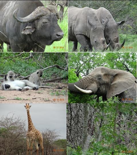Hluhluwe Umfolozi Day Safari Tour 9 November 2013