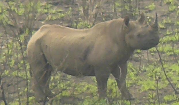 Black Rhino Hluhluwe