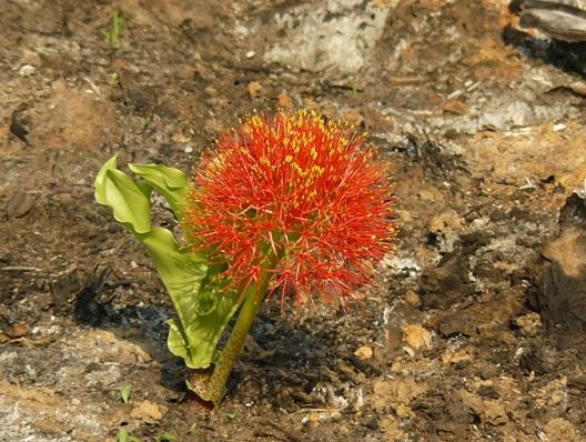 Flora of hluhluwe umfolozi game reserve