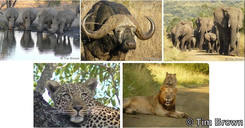 The Big 5 of Hluhluwe Umfolozi Game reserve on Durban Safari Tours