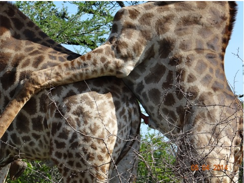 Durban Day Big 5 Safari Tour To Hluhluwe Umfolozi Game Reserve 5th