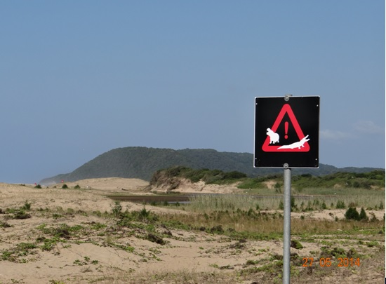 Maphelane Vegitated sand dune on our 5 Day Hluhluwe Umfolozi Big 5 Safari Tour including St Lucia and Durban