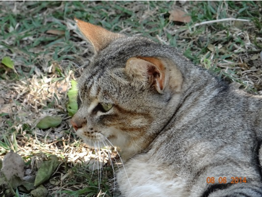 African Wild Cat on our Hluhluwe Umfolozi Big 5 and 3 Day Safari Tour from Durban