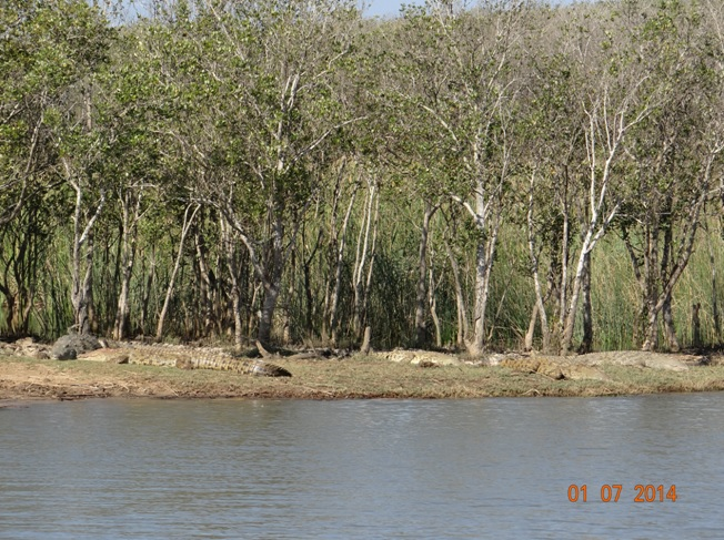Crocodiles Basking in the sun at St Lucia on our Durban Big 5 Private 3 Day Safari Tour to Hluhluwe Umfolozi Big 5 Game reserve 29 June to 1 July 2014