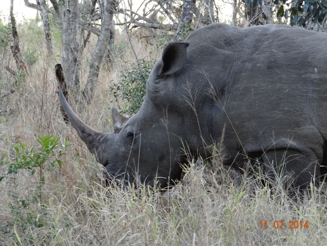 Rhino on our Durban Big 5 Honeymoon Private 3 Day Safari Tour to Hluhluwe Imfolozi Game Reserve 11th to 13th July 2014