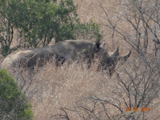 Black Rhino seen on our Big 5 Stretch of our Durban Safari Tour