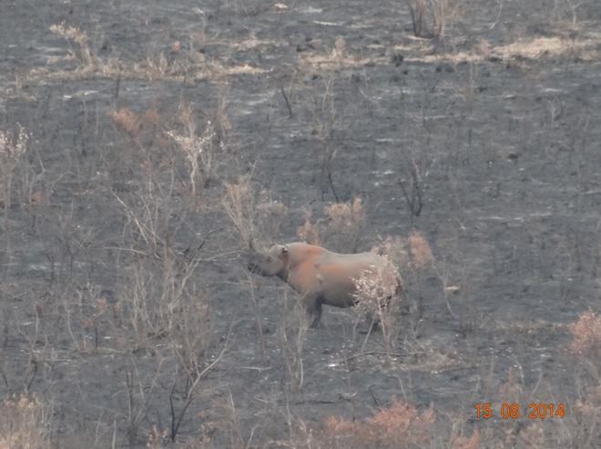 Black Rhino sighting in Hluhluwe game reserve on our Big 5 Durban Safari