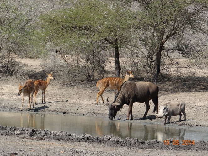 Day 2 at Bhejane hide we saw 3 species of animals at the watering hole on our Durban safari Tour