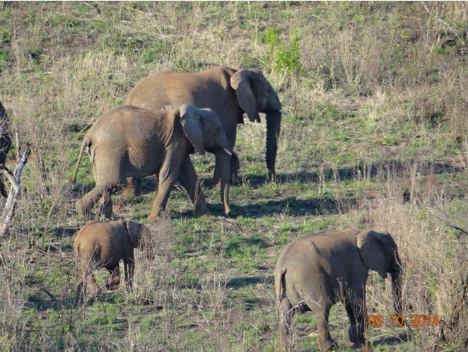Elephant of Hluhluwe Imfolozi game reserve near Durban on our Safari Tour