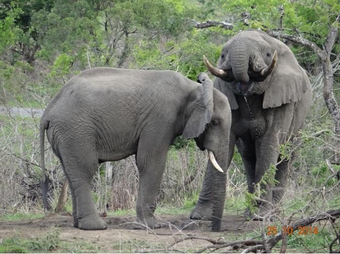 Elephants on our Durban day safari Tour