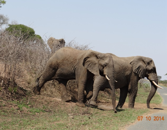 Muddy Elephants cross the road on our 3 Day Safari from Durban
