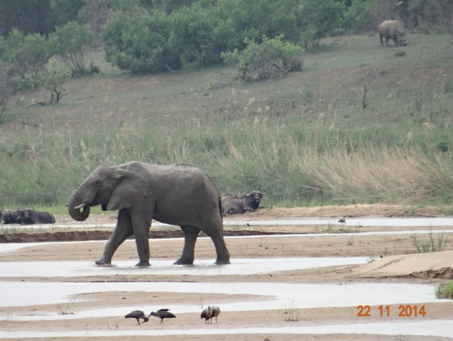 3 of the Big 5 in one picture on our Durban Day Safari Tour