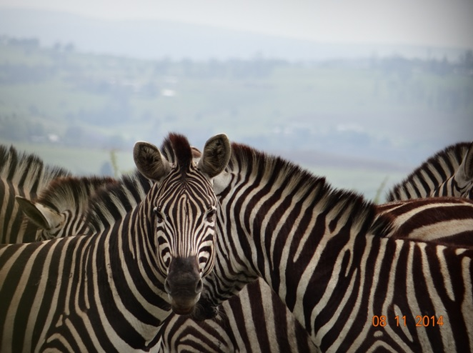 Durban Day Tour to Tala game reserve and the Valley of 1000 Hills Zulu Cultural Village
