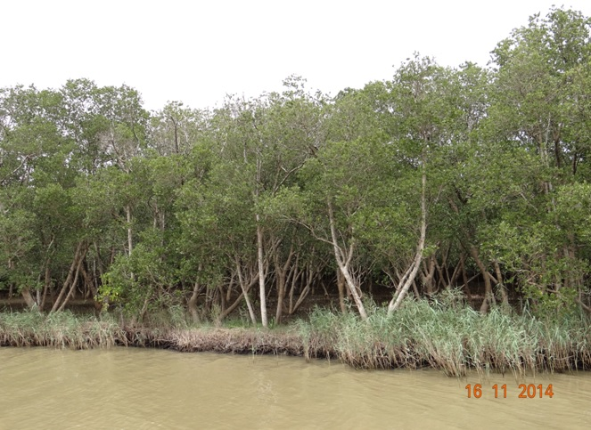 Mangrove Swamps at St Lucia estuary on our Safari Tour from Durban