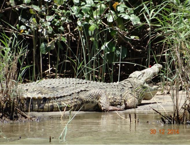 Crocodile at St Lucia on our Durban safari tour