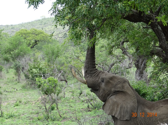 Elephant seen on our exit of Hluhluwe Imfolozi game reserve