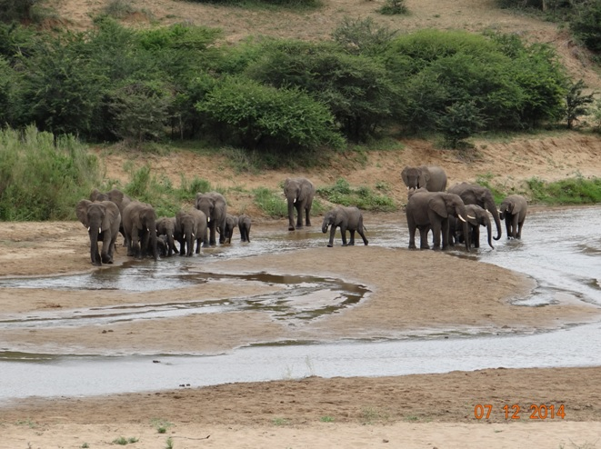 Herd of Elephants in the Umfolozi river on day 2 of our Durban safari tour