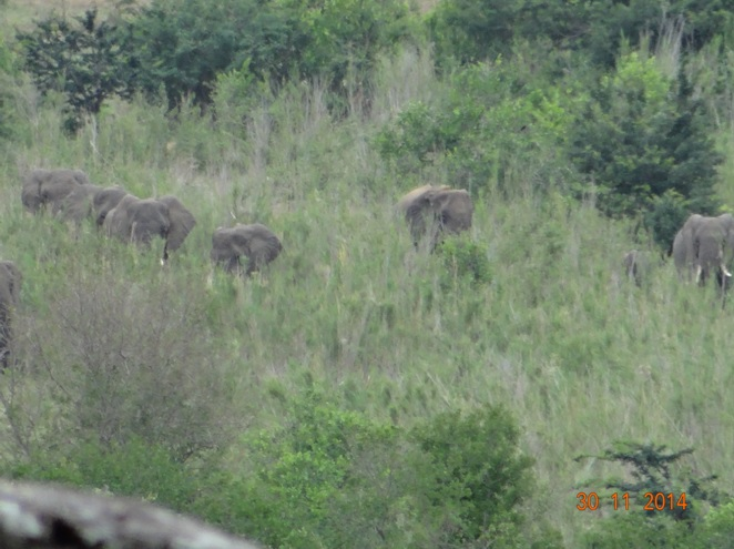Herd of Elephants seen on our Safari tour from Durban