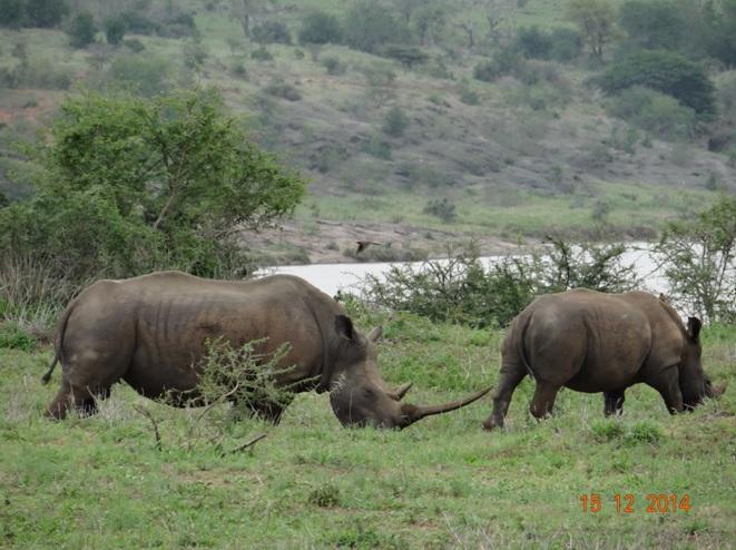 Rhino mother and calf seen on our Durban day safari tour