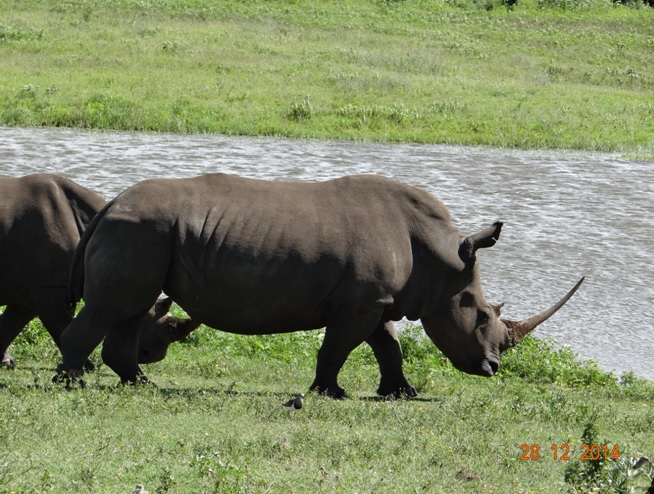 Rhinos on our Durban day safari tour