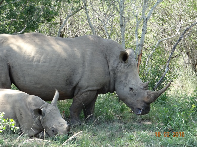 Durban 2 day safari; Rhinos