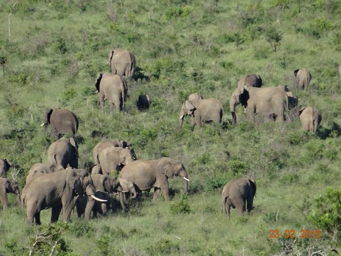Durban 2 day safari tour; Elephants