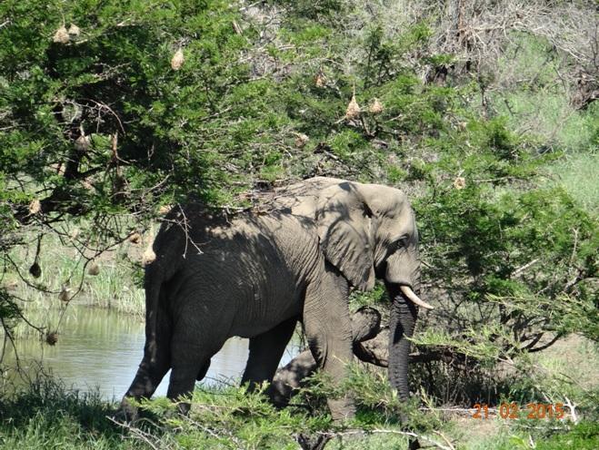 Durban day safari tour; Elephant at entrance