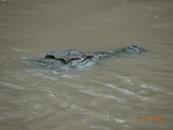 Durban safari tours; Crocodile