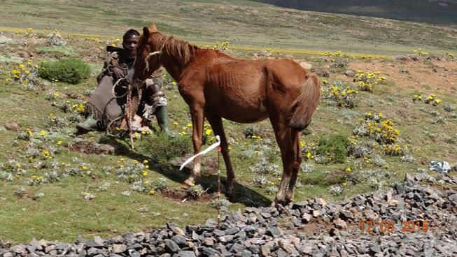 Drakensberg day tour, Sani Pass, Basotho herder