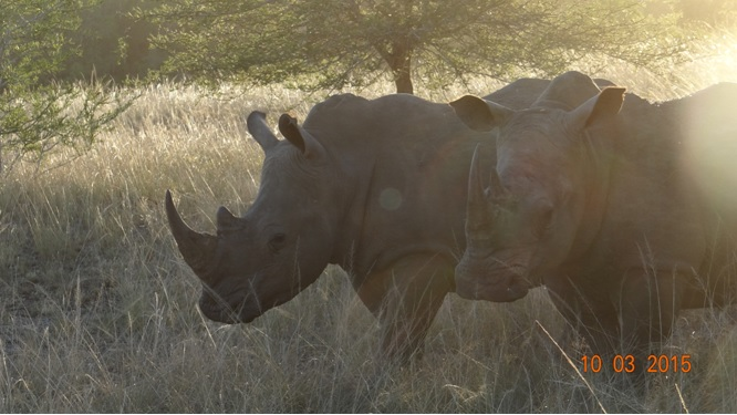 Durban 2 day safari; Rhinos in the sun