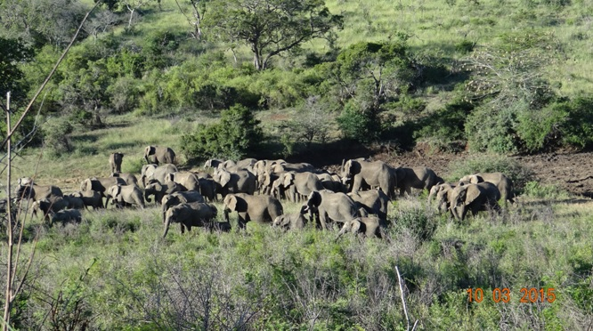 Durban 2 day safari; huge herd of Elephant