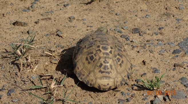 Durban 5 Day Tour; Leopard Tortoise