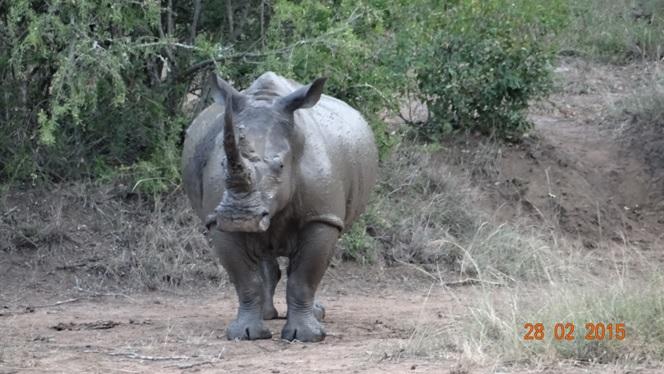 Durban 5 Day Tour; Muddy Rhino