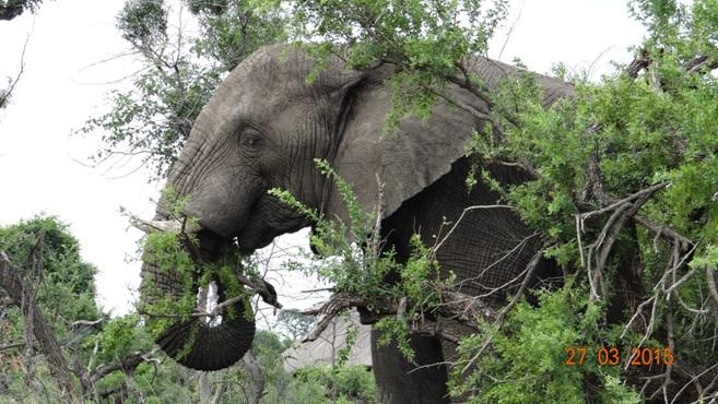 Durban Safaris and Tours; Elephant feeding