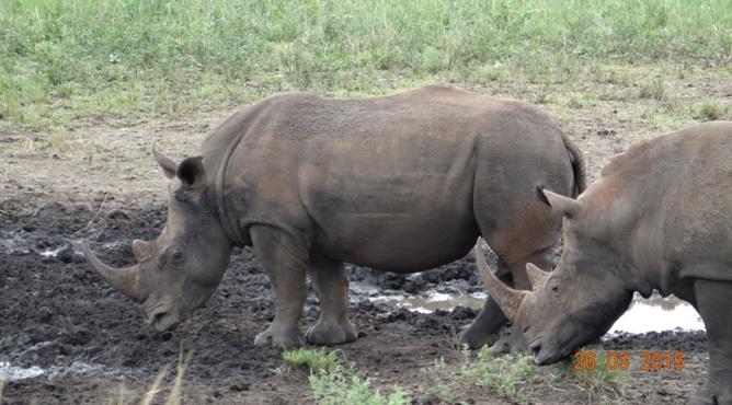 Durban Safaris and Tours; Rhino