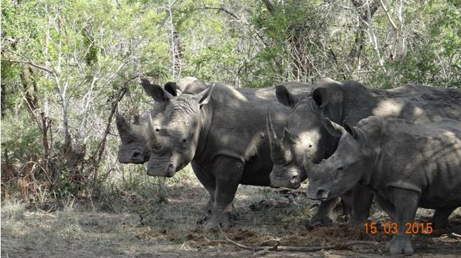 Durban day safari tour; Crash of Rhino