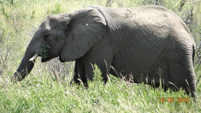 Durban day safari tour; Elephant feeding