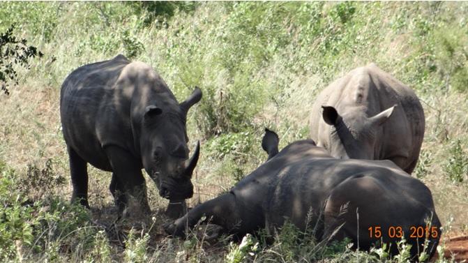 Durban day safari tour; Rhino