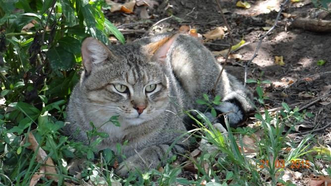KwaZulu Natal 3 day safari tour, African wild cat
