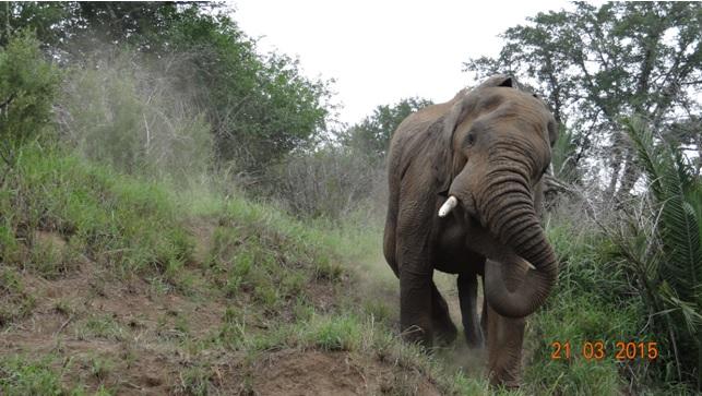 KwaZulu Natal 3 day safari tour, Elephant Bull