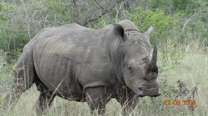KwaZulu Natal 3 day safari tour, Rhino